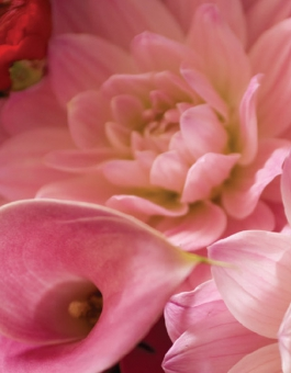 Pink flowers bunched